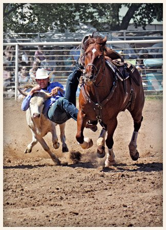 Calf Wrestling Mother Lode Round-Up Rodeo and Parade Sonora California