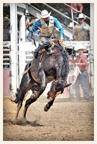 Bronc Riding Mother Lode Round-Up Rodeo and Parade Sonora California